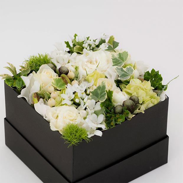 boxs-001
